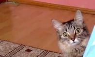 Katino siaubiakas