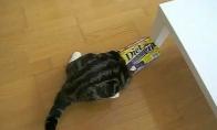 Katinas mėgsta dėžutes