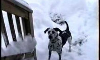 Šunelis labai mėgsta sniegą
