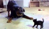 Maži kačiukai niekada nepasiduoda