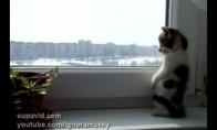 Kačiukas žiūri pro langą