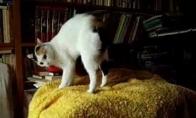 Katinas šoką flamenką