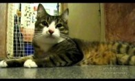Katinas ir fleita