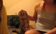 Kačiukas reikalauja dėmesio!