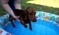 Šuneliui atrodo, kad jis plaukia