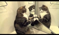 Katinas Maru kovoja su veidrodžiu