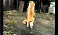 Katinas labai myli šunį