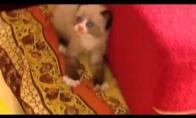 Baisiausia diena kačiuko gyvenime