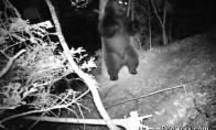 Kas iš tikrųjų naktimis vyksta miške