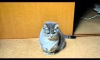 Elgetaujantis katinas