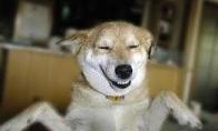Salsa šuo
