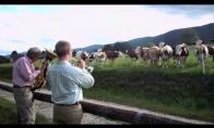 Muzika karvėms