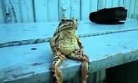 Varlė sėdi kaip žmogus