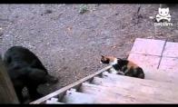 Katės valdo