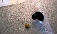 Juokingas katukas bando atrodyti baisus
