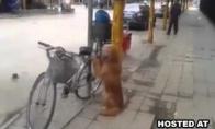 Šuo saugo dviratį
