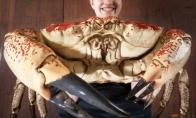 Didžiausias pasaulyje krabas