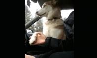 Haskis automobilyje laikosi už rankos