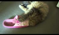 Šlepetė prigavo katę