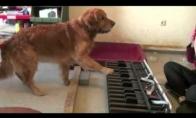 Tobula šuns klausa