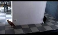 Mieli kačiukai žaidžia slėpynių