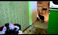 Katinas atneša šeimininkei telefoną
