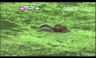 Voverė pateko į mirties sūkurį