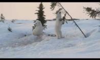Baltieji lokiukai linksminasi sniege