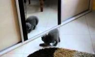 Kačiukas kovoja su savo atvaizdu