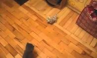 Katinas karatistas