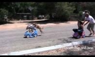 Žmonės lenktyniauja su šunimis