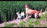 Šuniukas-spyruokliukas
