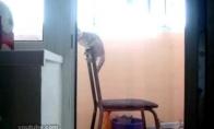 Gimnasto pasirodymas