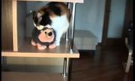 Katė Frosia prieš ežiuką