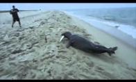 Ruonis atiminėja iš žvejų žuvį