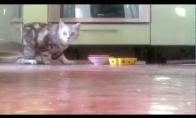 Drovi katė nemėgsta valgyt prie žmonių