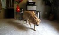 Šuo atneša alų šeimininkei
