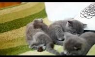 Maži mieli kačiukai