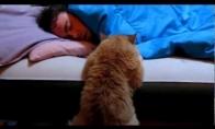 Katinas laukia, kol šeimininkas atsikels