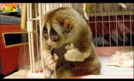 Neįtikėtinai mielas gyvūnas
