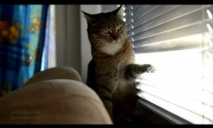 Kai katinas žiauriai neturi ką veikti...