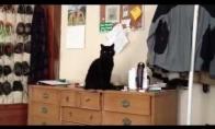 Š*knius katinas