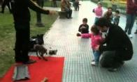 Nerealus žaislinis šuo