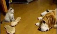 Juokingiausias kačiuko puolimas