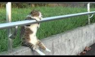 Chill-out katinas