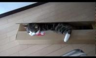 Katinas Maru ir ilga dėžė