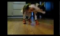 Šunys ir batai