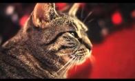 Dainininkas katinas