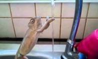 Rankas plauti reikia, net jei esi chameleonas