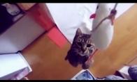 Kačių prikolai